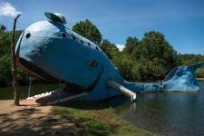 La Blue Whale