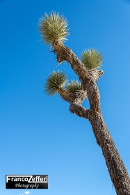 Joshua Tree National Park (California)